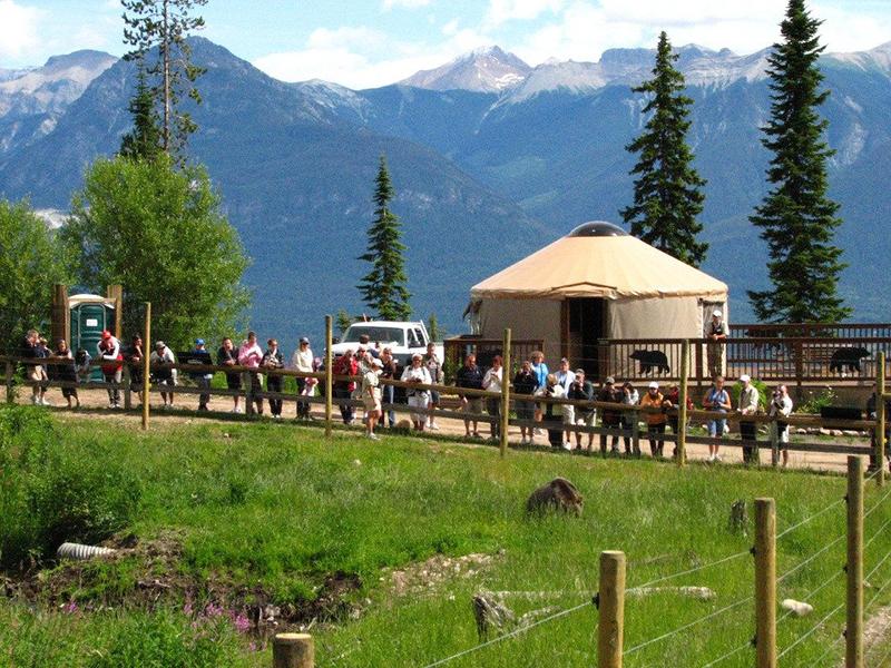 Grizzly Bear Refuge em Banff