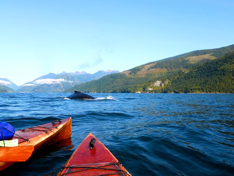 Vista da excursão de caiaque em Vancouver