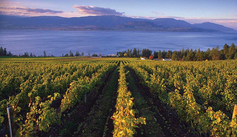 Vineyards em Vancouver